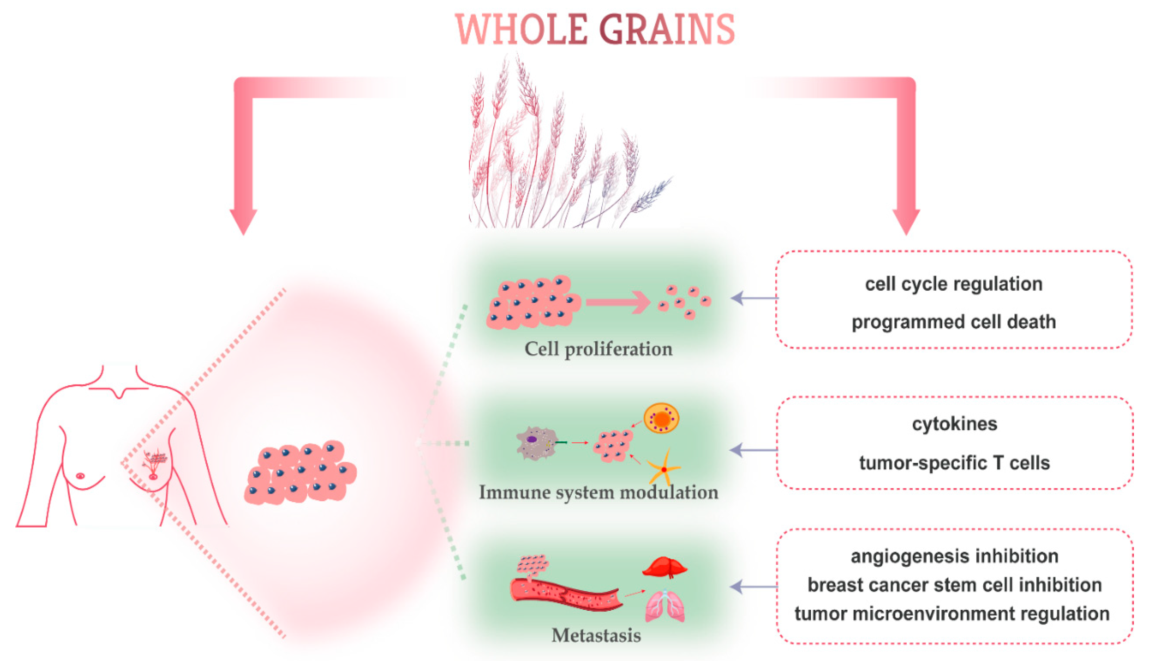Nutrients | Free Full-Text | Whole Grain Consumption for the