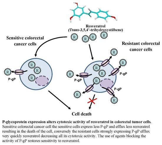 Nutrients Free Full Text P Glycoprotein 1 Affects Chemoactivities Of Resveratrol Against Human Colorectal Cancer Cells Html