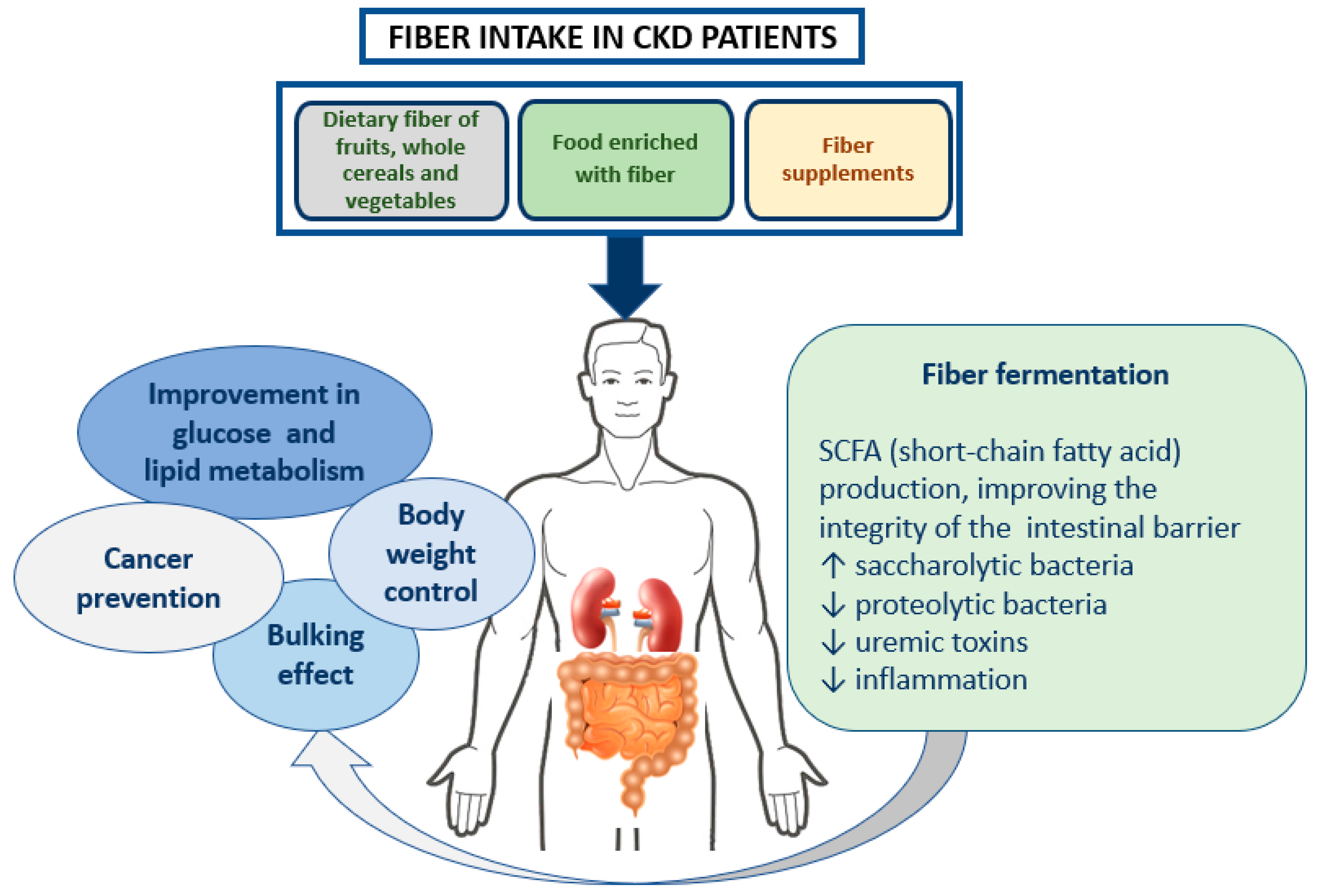 Nutrients Free Full Text Dietary Fiber And Gut Microbiota In Renal Diets Html