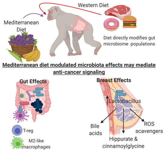 Nutrients Free Full Text From The Table To The Tumor The Role Of Mediterranean And Western Dietary Patterns In Shifting Microbial Mediated Signaling To Impact Breast Cancer Risk Html