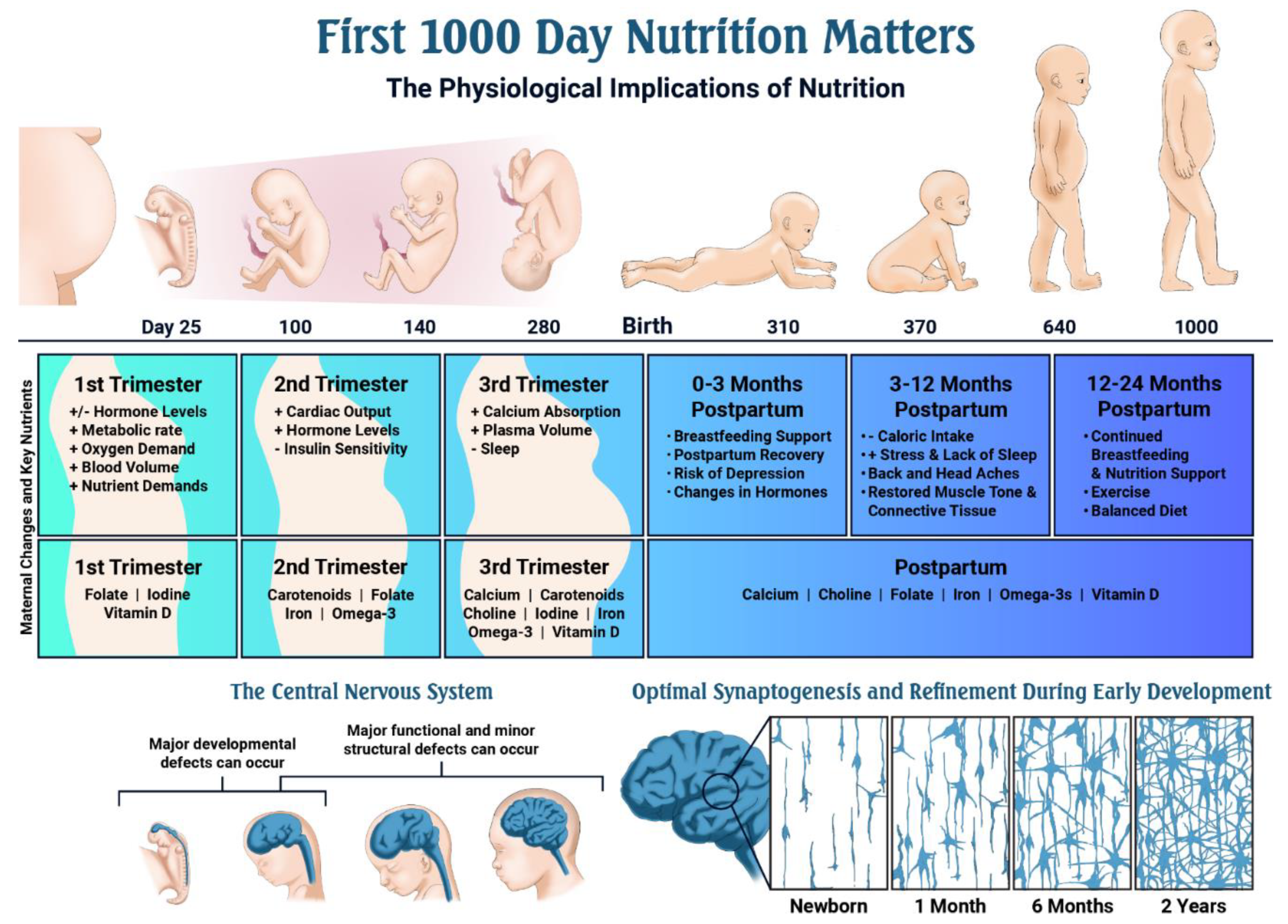 Nutrients | Free Full-Text | Nutritional Gaps and Supplementation in the  First 1000 Days | HTML