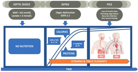 Nutrients Free Full Text Nutrition In Sepsis A Bench To
