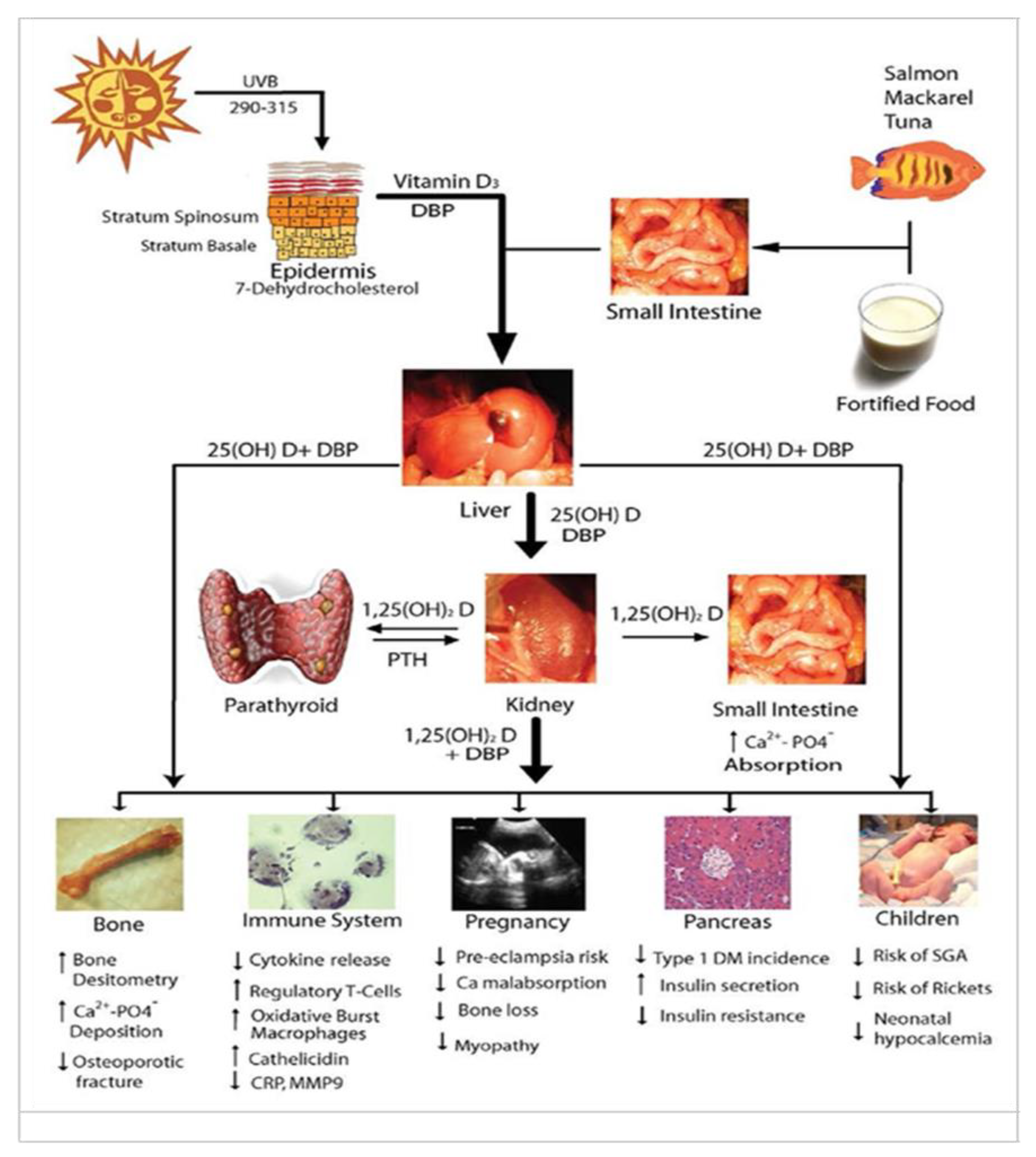 Nutrients Free Full Text Role Of Vitamin D In Athletes And Their Performance Current Concepts And New Trends Html
