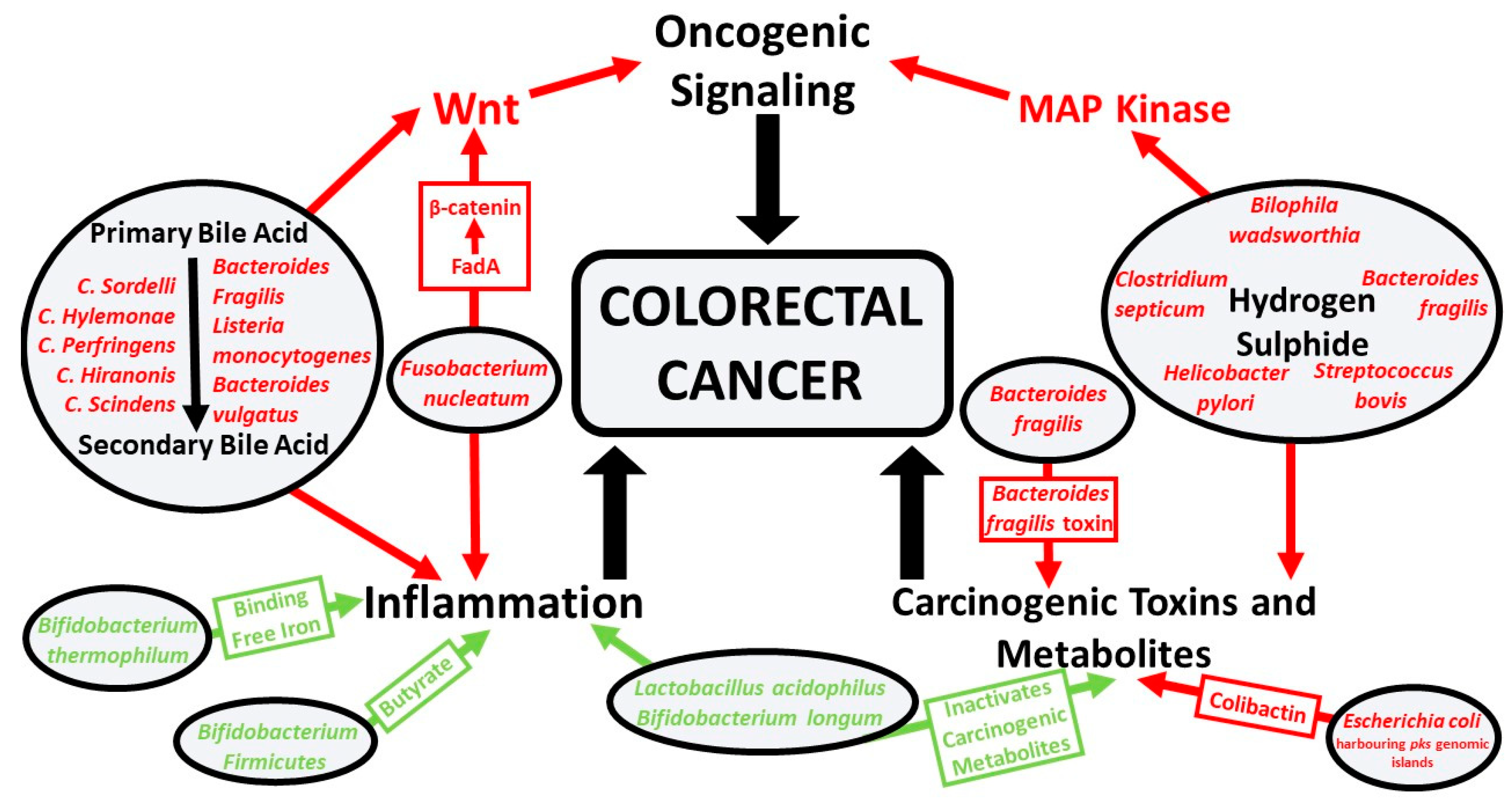 Nutrients Free Full Text Influence Of Iron On The Gut Microbiota In Colorectal Cancer Html