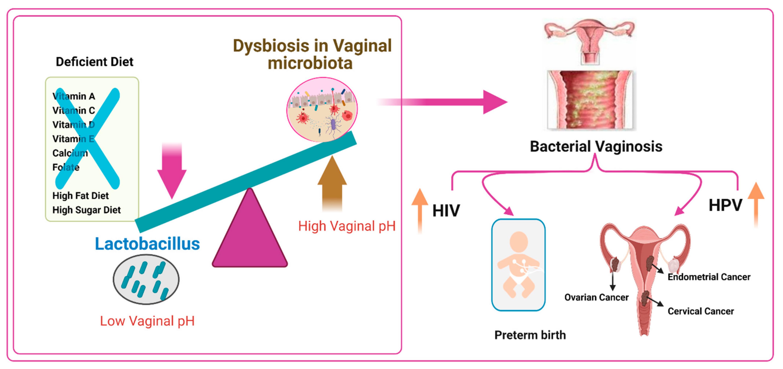 endometrial cancer hpv)