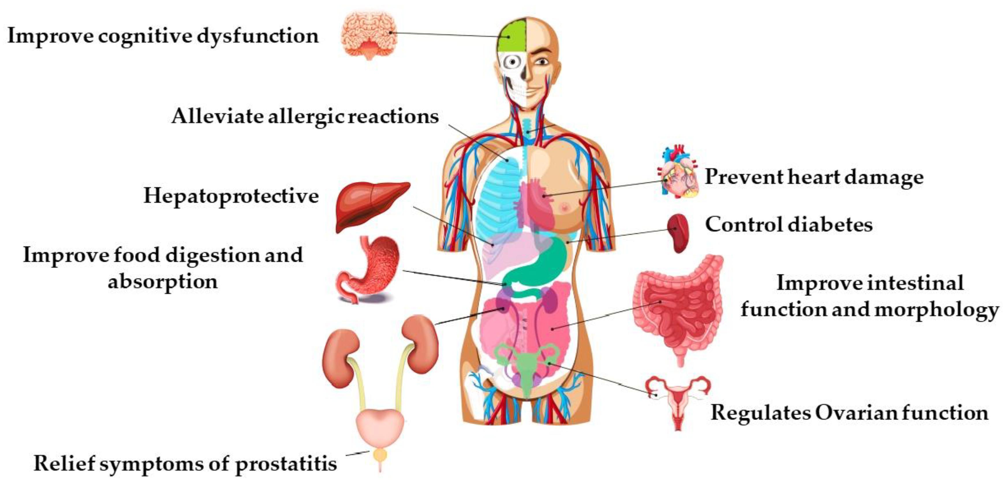 Ki kezelte a prostatitis propolis Hogyan kell inni vizet a prosztatitisben