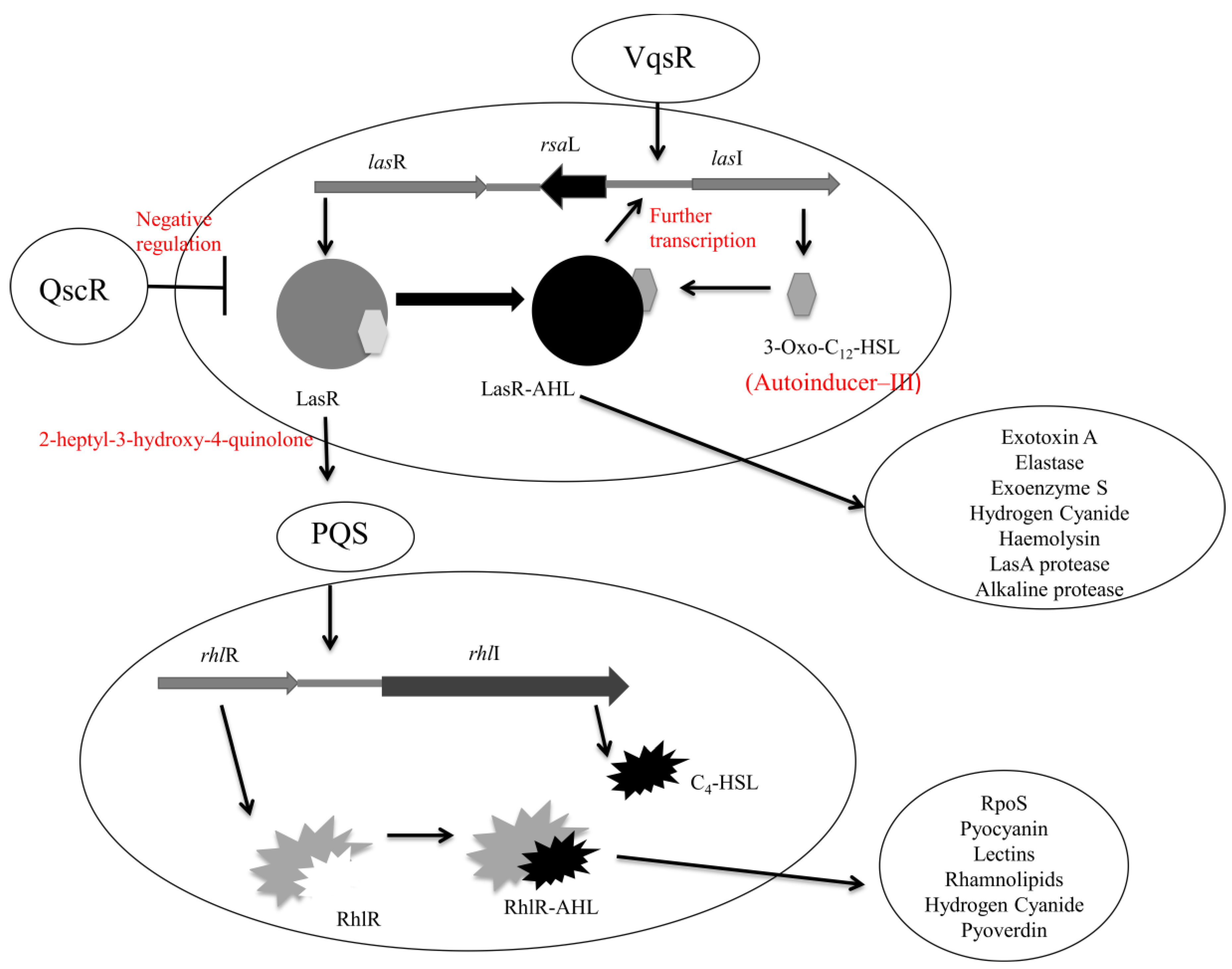 The formation of pseudomonas biofilms biology essay