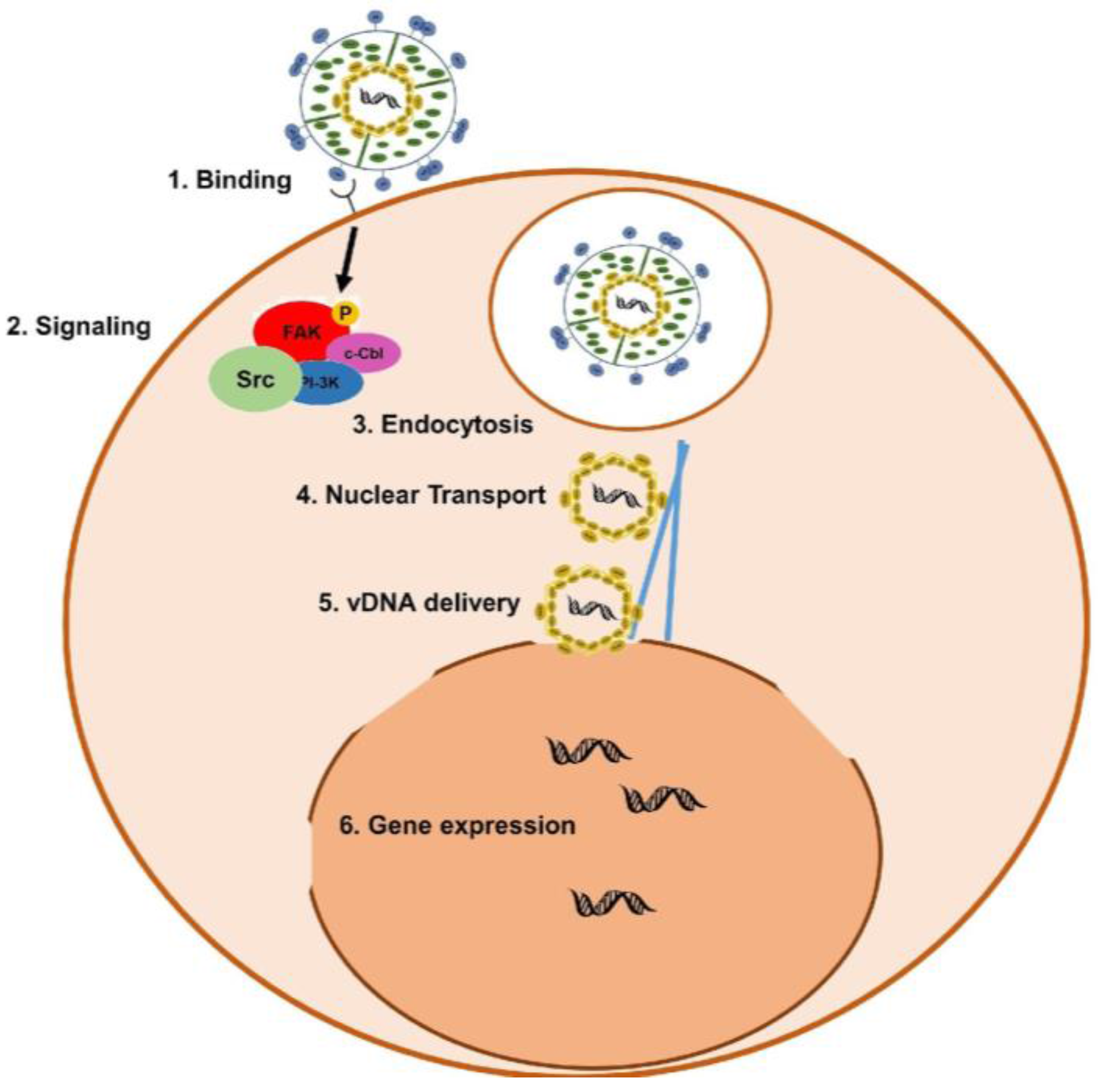 notch proteins and kaposis sarcoma essay Kaposi's sarcoma (ks) is a type of cancer that can form in the skin, lymph nodes, or other organs kshv proteins are uniformly detected in ks cancer cells.