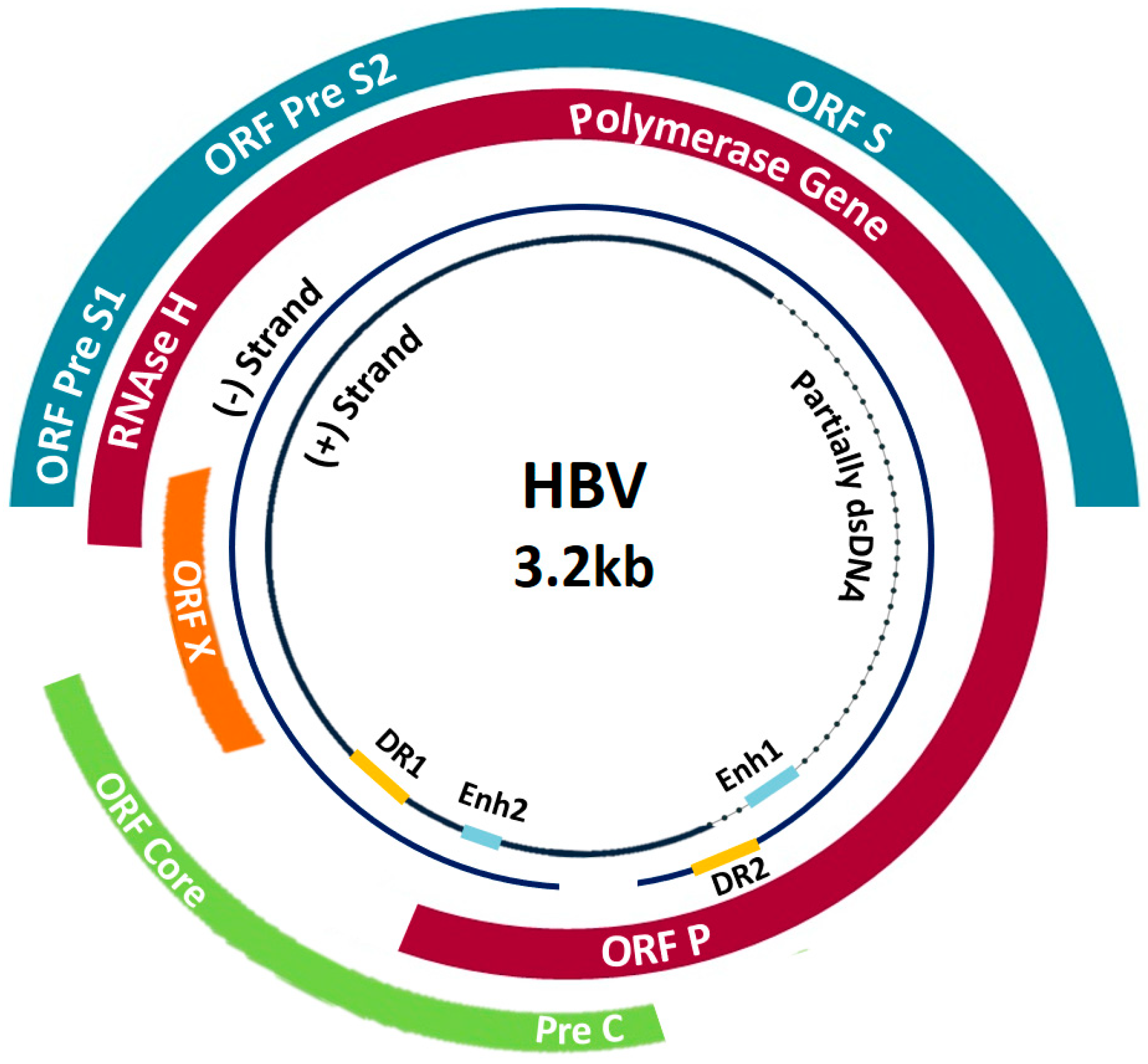 Pathogens | Free Full-Text | Hepatitis B Virus Molecular
