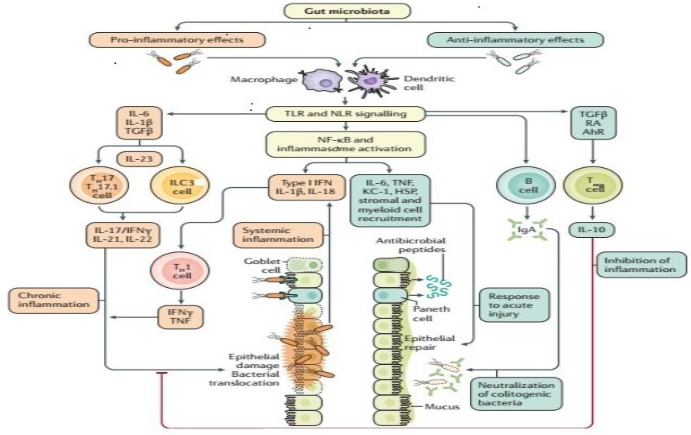 Pathogens | Free Full-Text | Alteration of Gut Microbiota in