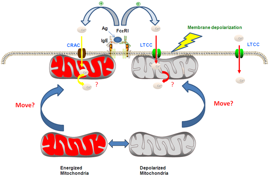 the role of nsaids in the Understanding nsaids: from aspirin to cox-2  deal of controversy exists about the role of nsaids in chronic, overuse injuries (eg, lateral epicondylitis.