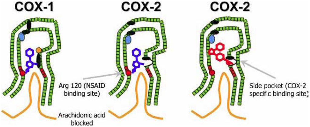 inhibitors of steroidal cytochrome p450 enzymes as targets for drug development