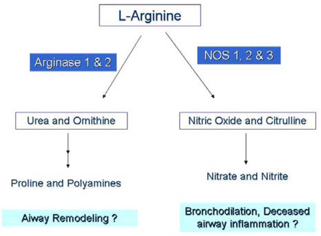 l arginine research papers Advanced materials research papers by keyword: l(+)-arginine template by the sol-gel method using l(+)-arginine as a promoter for the reaction.