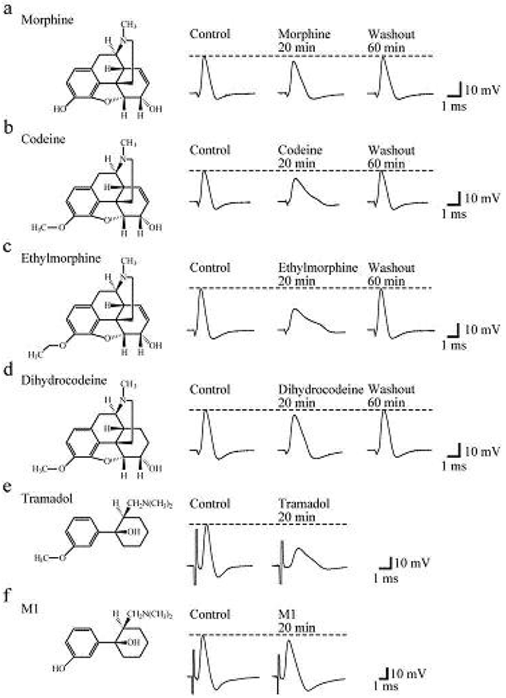 structure activity relationship of progesterone pdf viewer