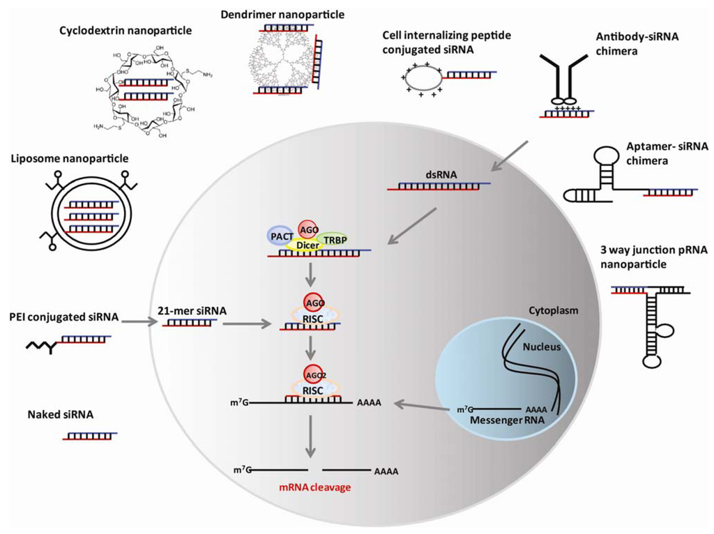 Therapeutic RNAi