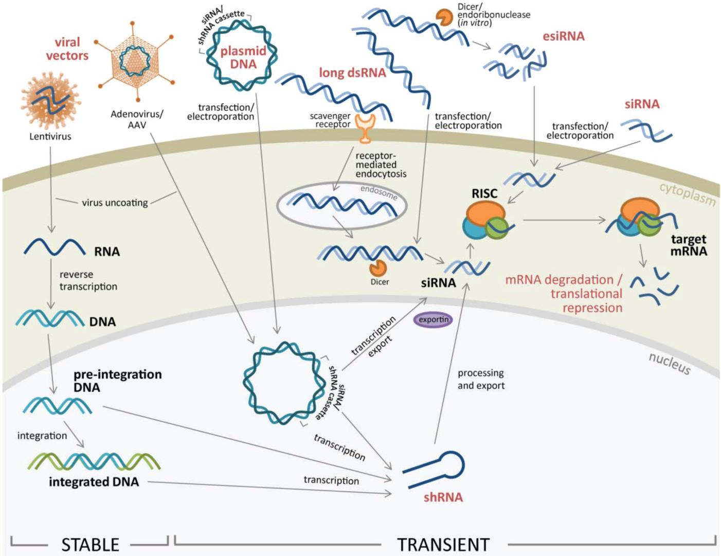 rnai screening and gene knockdown Large-scale gene silencing using rnai high-throughput screening (hts) has  opened an exciting frontier to systematically study gene function in mammalian.