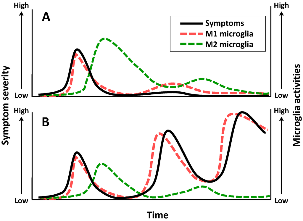 Pharmaceuticals | Free Full-Text | Role of Microglial M1/M2 ...