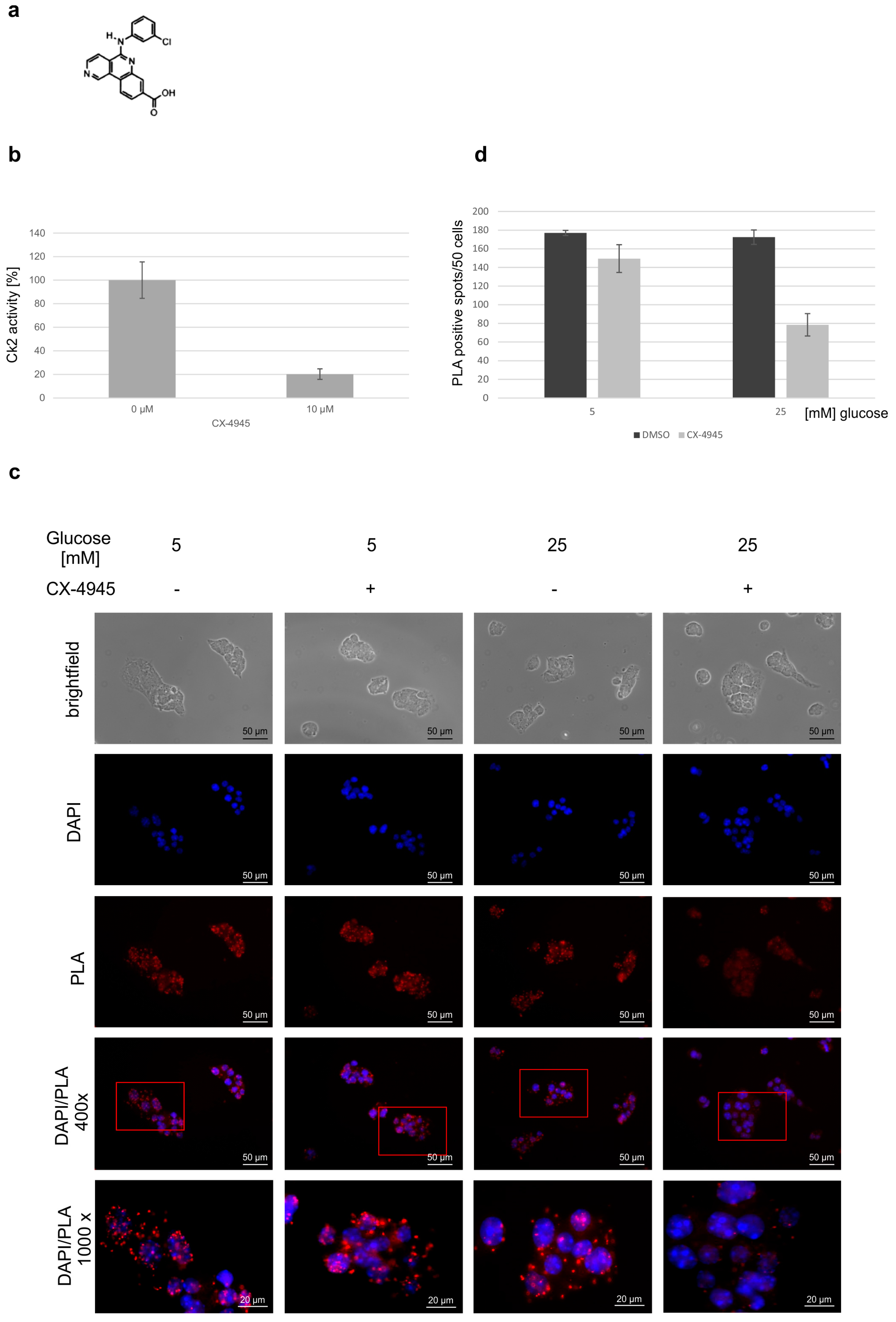 protein phosphorylation by semisynthesis from paper to practice Chapter 1 protein phosphorylation by semisynthesis: from paper to practice the microinjection our lab is expanding on the notion of phosphorylation by protein.