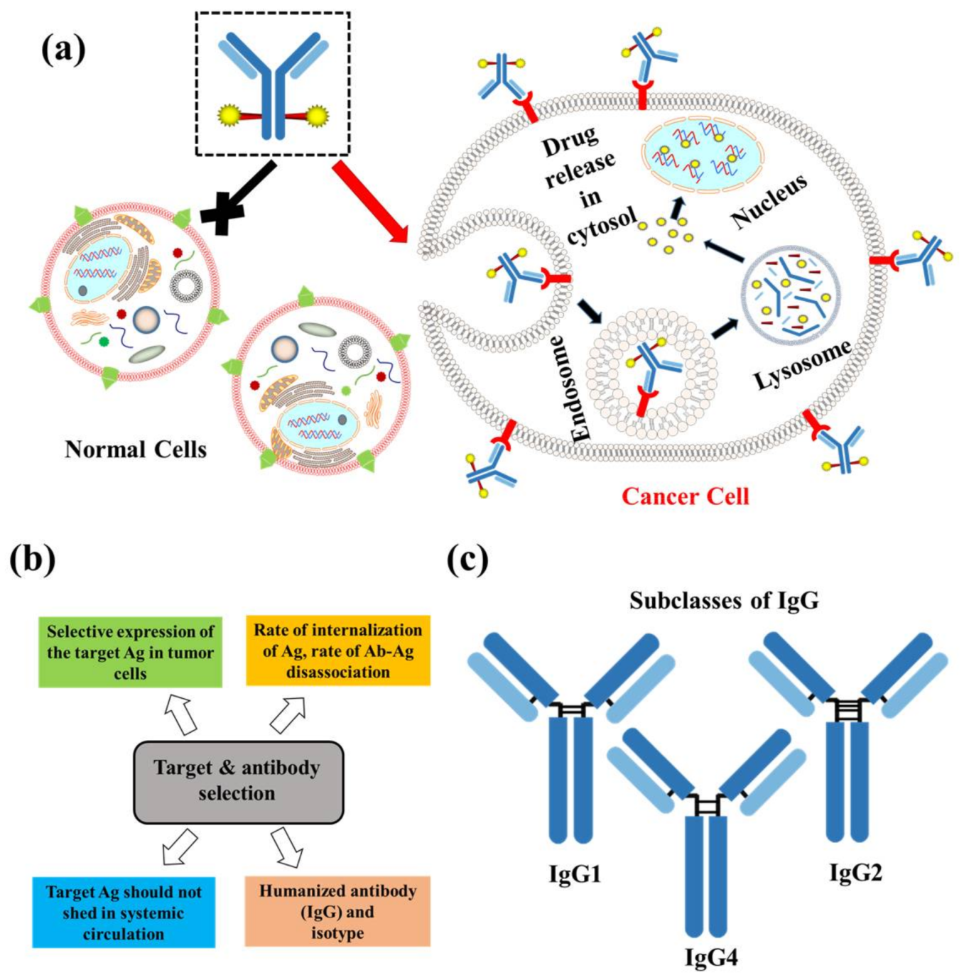 [PDF] Antibody drug conjugates: Progress, pitfalls, and