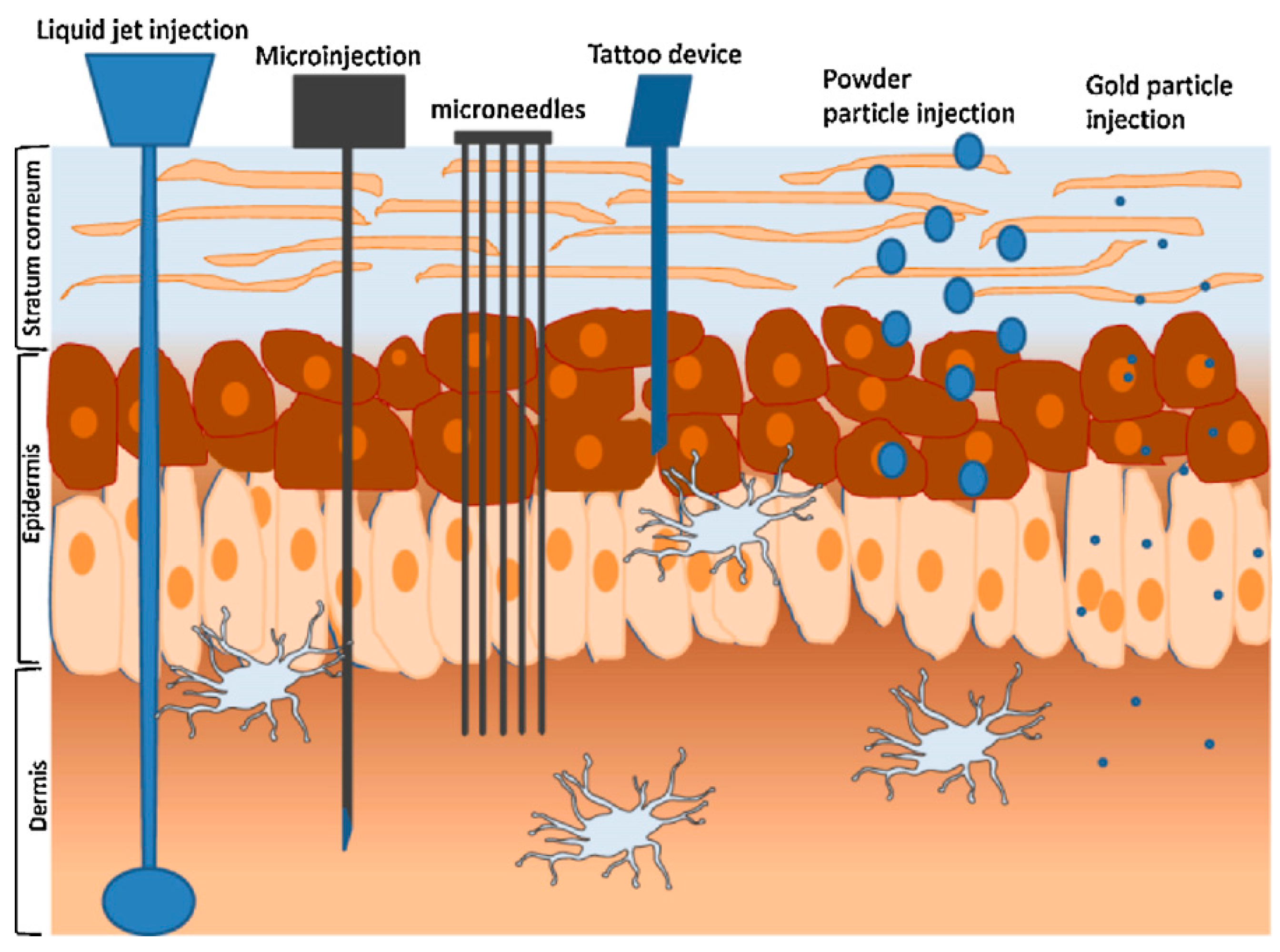 Pharmaceutics Free Full Text Transdermal Drug Delivery Diagrammatical Image Of Injectors 07 00438 G010 1024