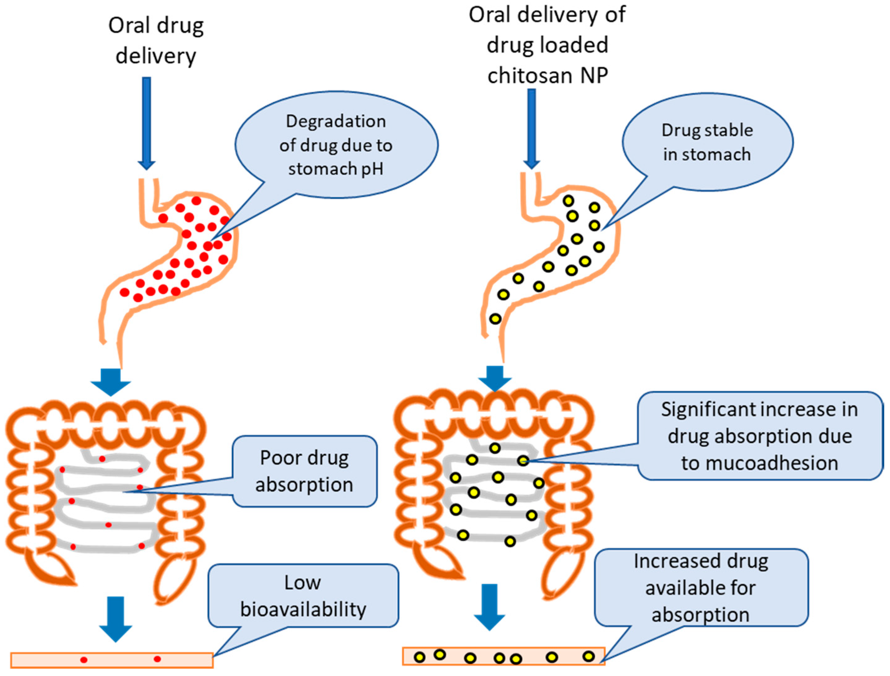 Pharmaceutics | Free Full-Text | An Overview of Chitosan