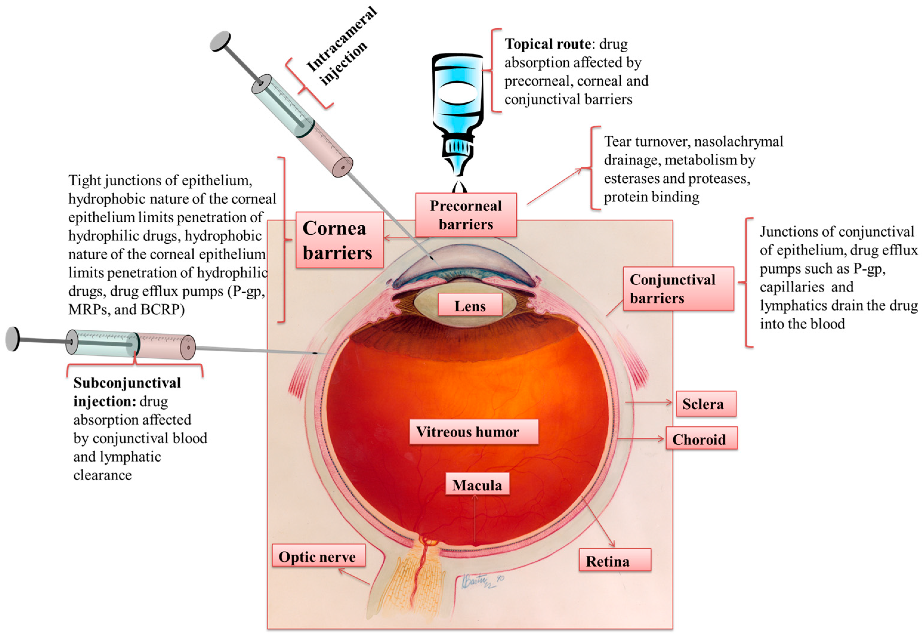 Pharmaceutics | Free Full-Text | Ocular Drug Delivery