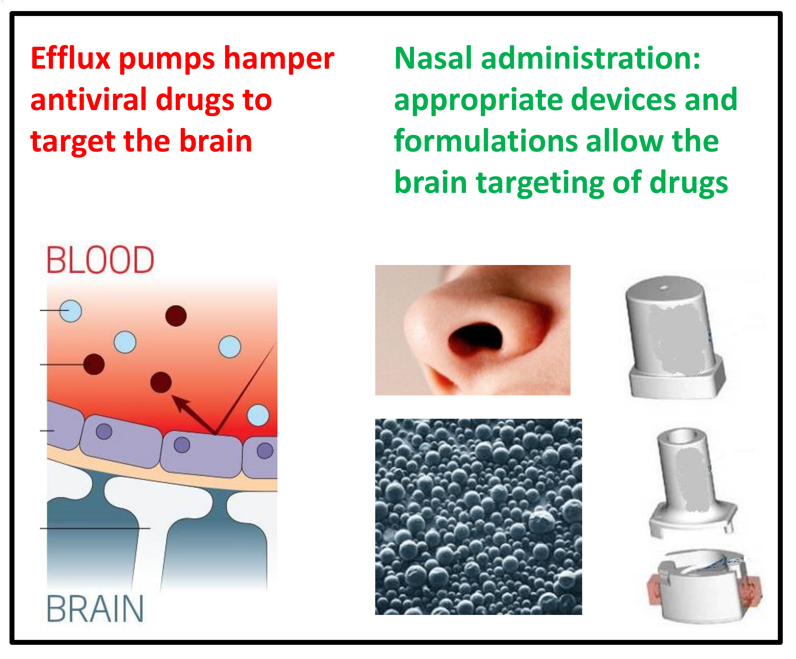 Pharmaceutics | Free Full-Text | Nose-to-Brain Delivery of