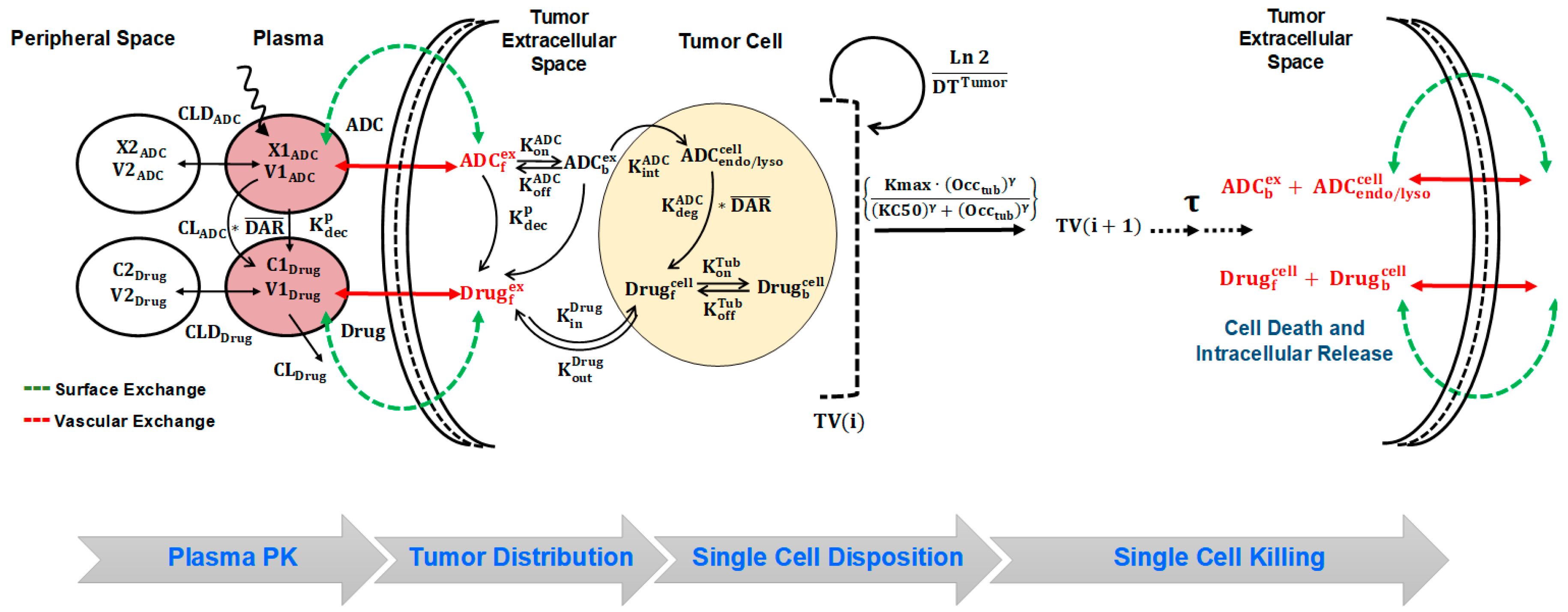 Pharmaceutics | Free Full-Text | A Cell-Level Systems PK-PD