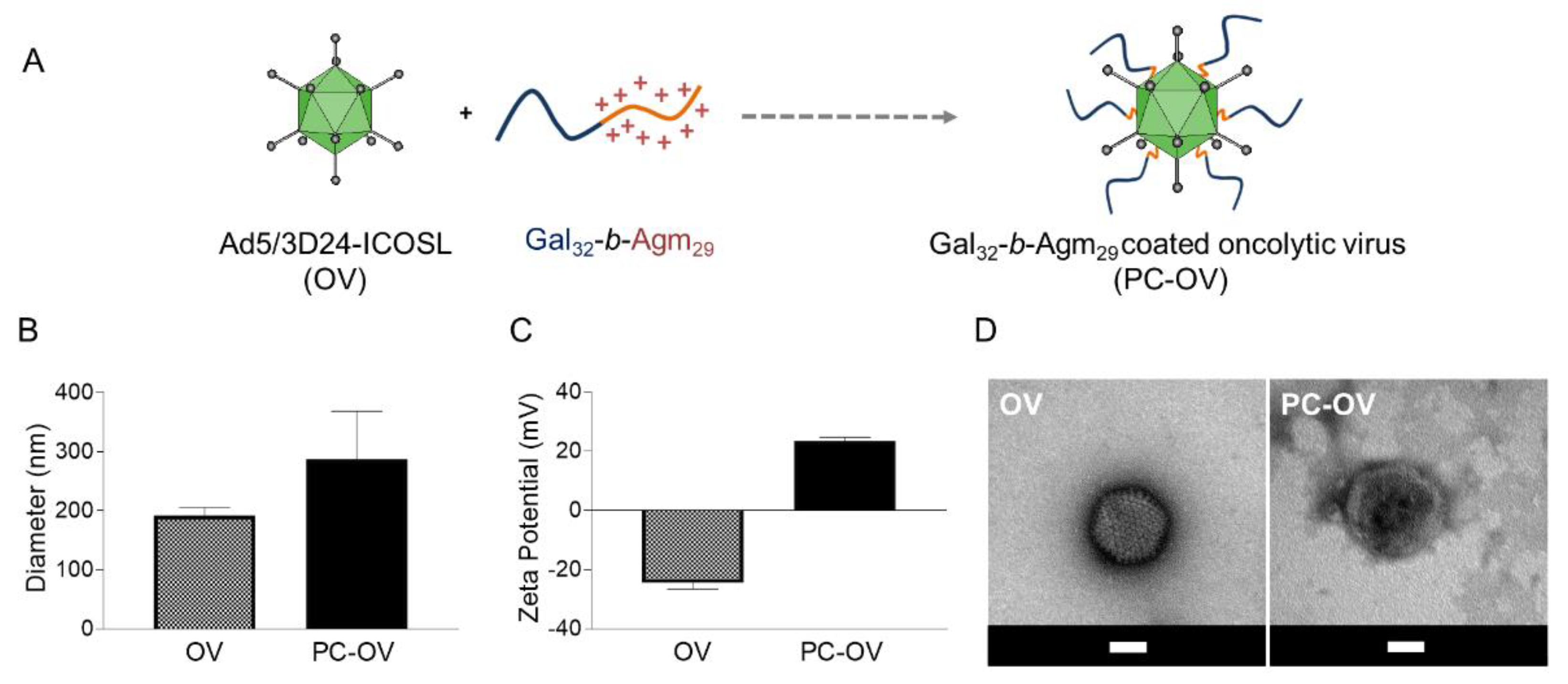 Selective infectivity by retargeted virus. SUIT2 and HUVE