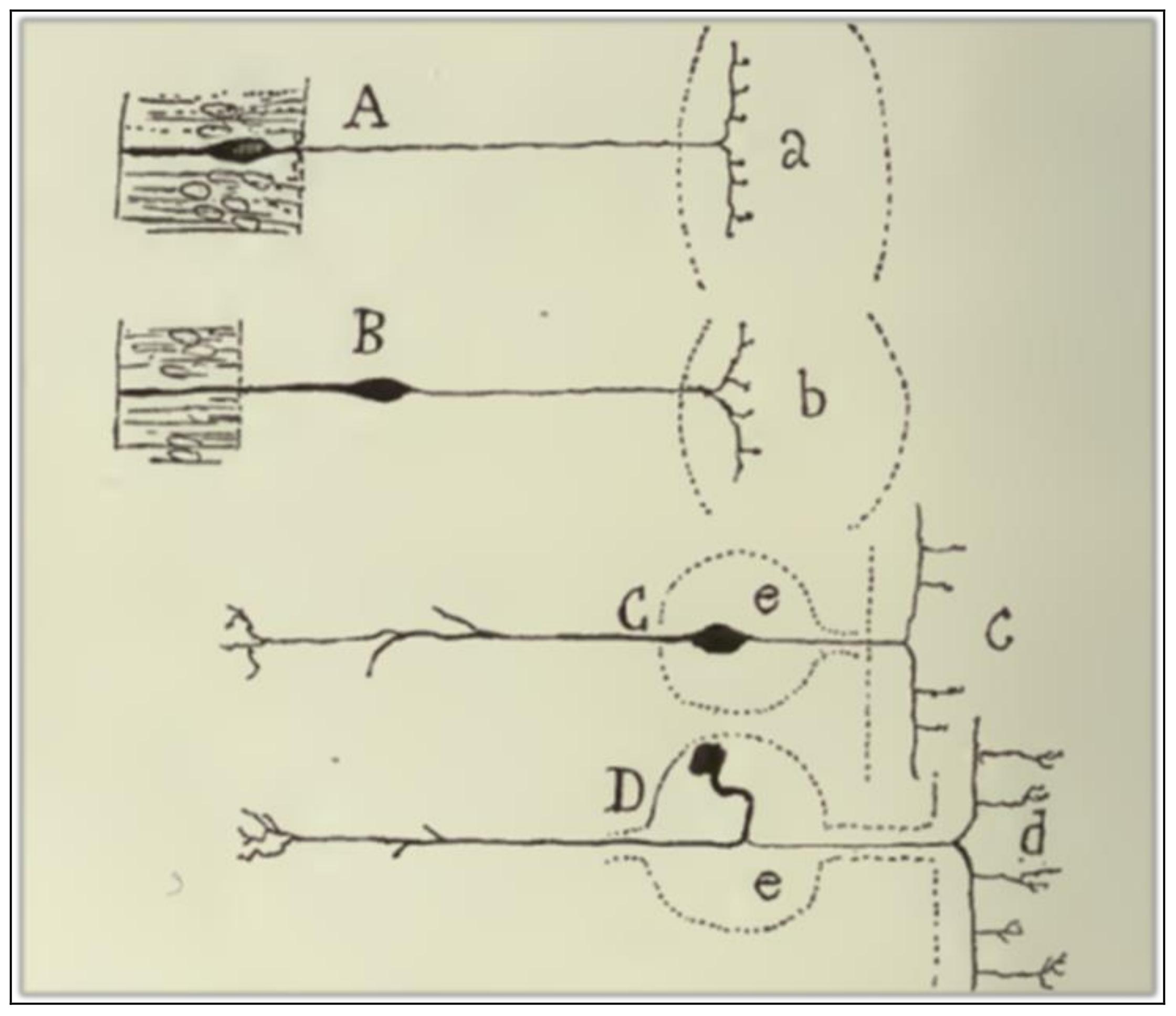 neurophysiology of nerve impulses frog subjects answers
