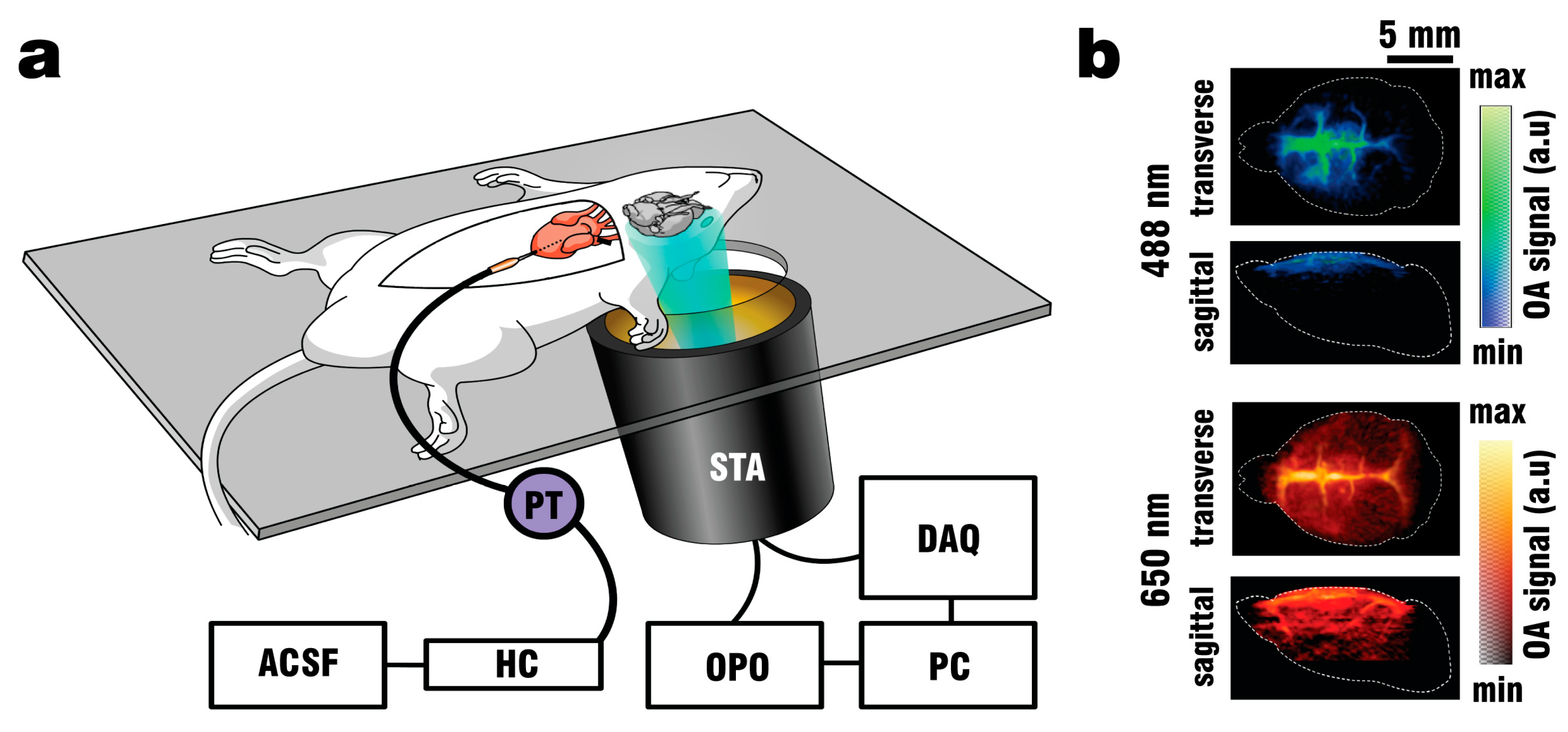 Photonics   Free Full-Text   Optoacoustic Calcium Imaging of