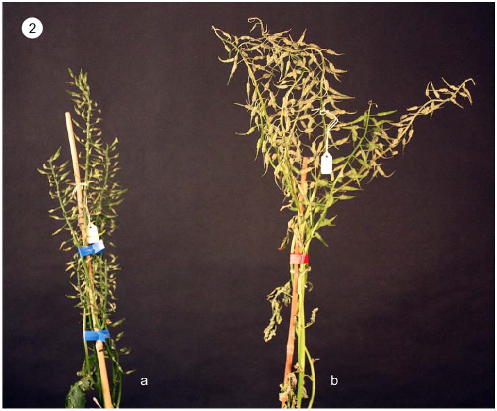 Repin image b plant phenotype of the on pinterest