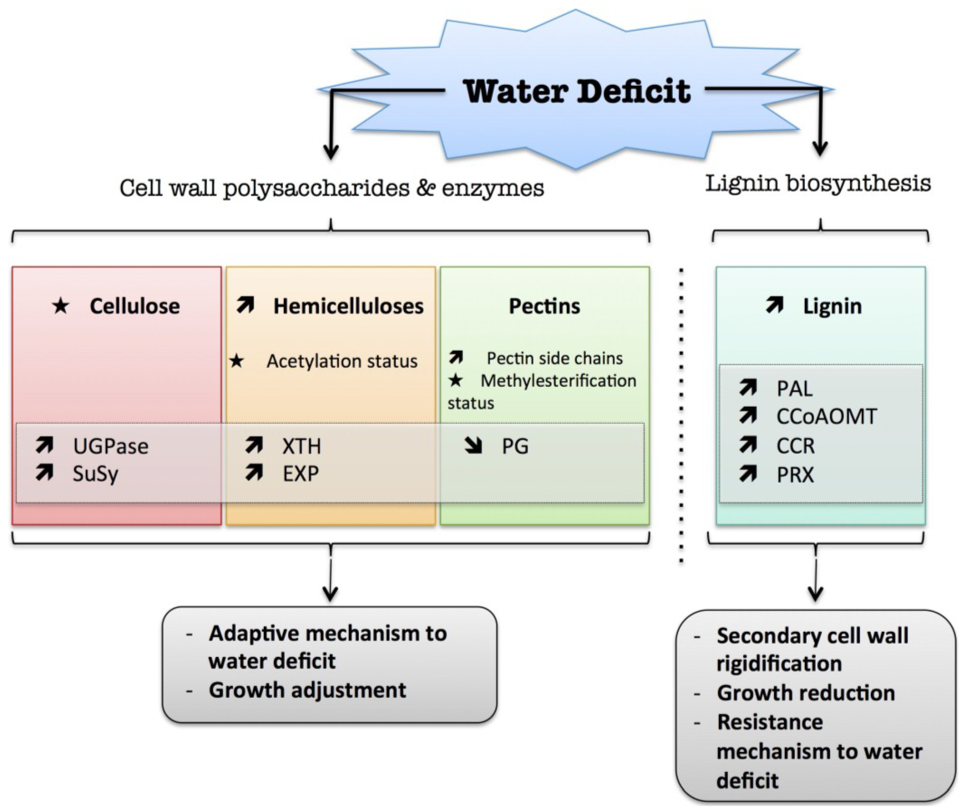Plants | Free Full-Text | Cell Wall Metabolism in Response to