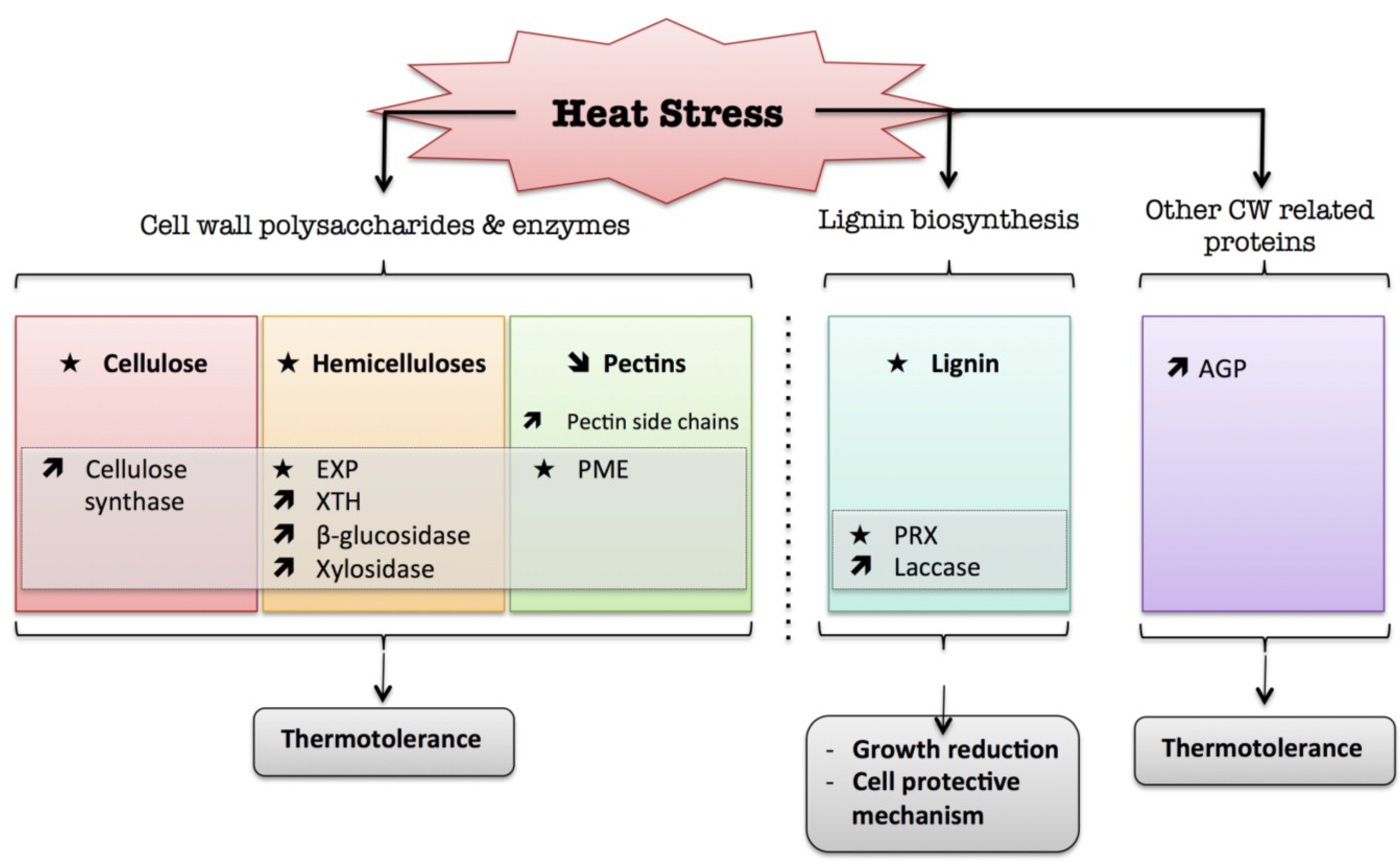 Chilling stress and its effect in plants.