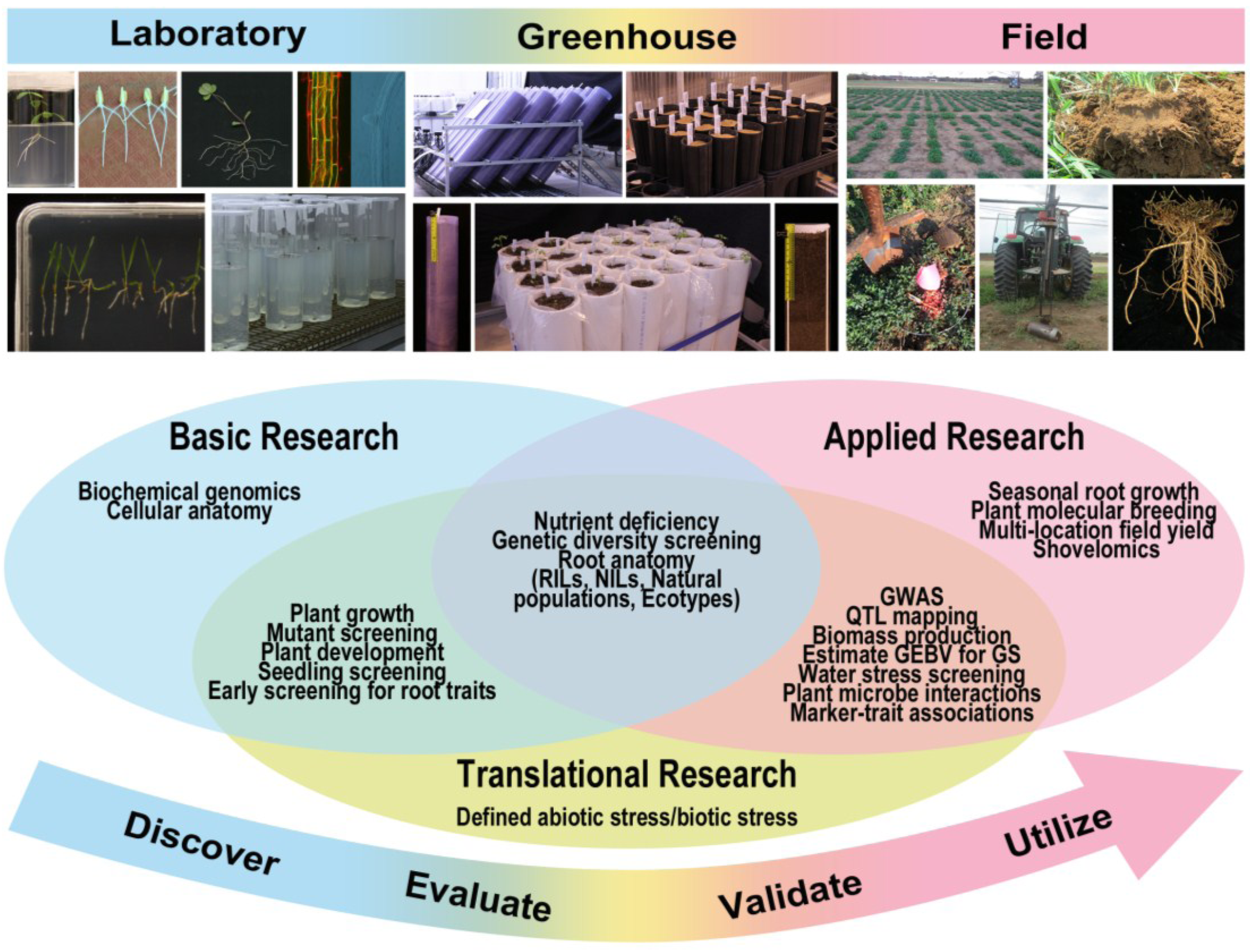 Plants Free Full Text Root Traits And Phenotyping Strategies For