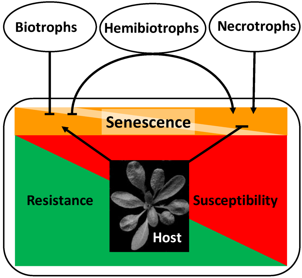 relationship between pathogen and host