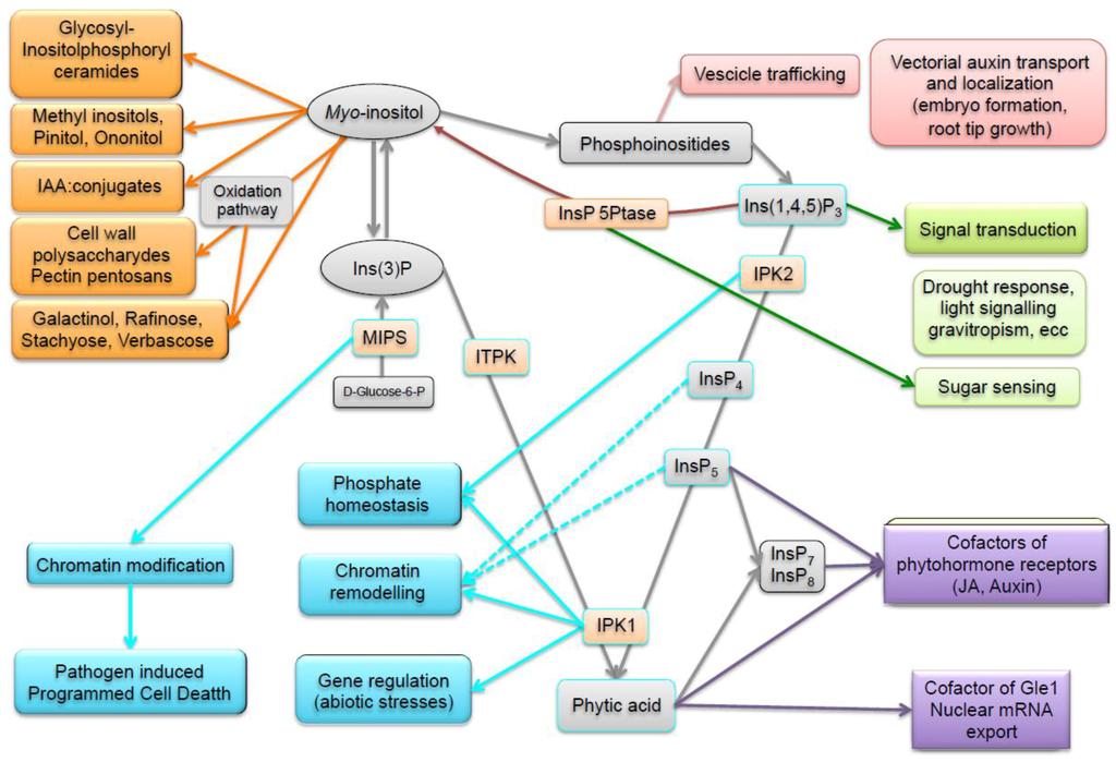 describe the structural compartmentation of mammalian