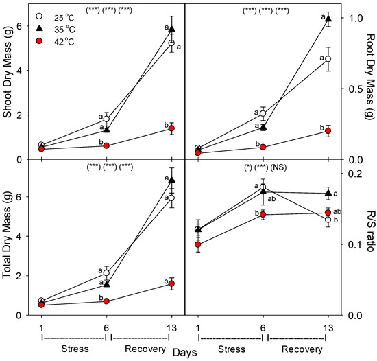 Heat Stress Decreases Levels of Nutrient-Uptake and -Assimilation Proteins in Tomato Roots