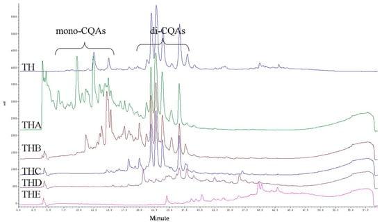 Caffeoylquinic Acids from the Aerial Parts of Chrysanthemum coronarium L.