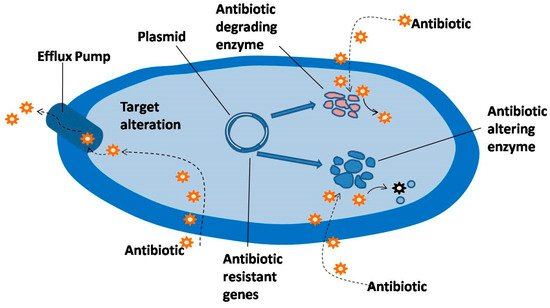 Antimicrobial Resistance and the Alternative Resources with Special Emphasis on Plant-Based Antimicrobials—A Review