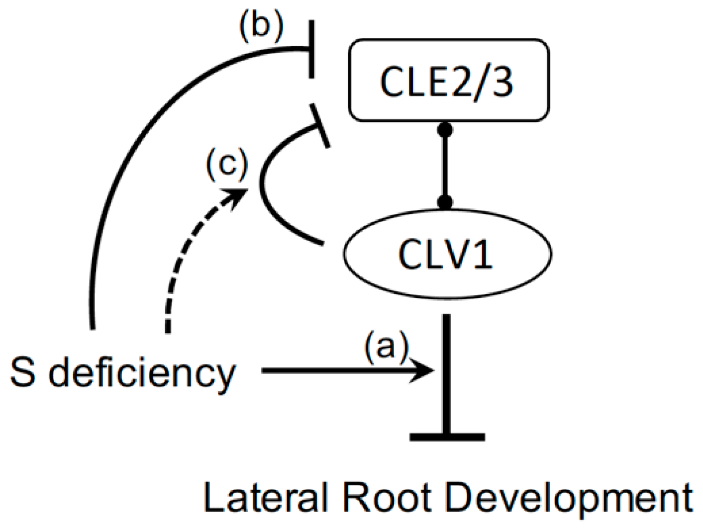 Plants | Free Full-Text | CLE-CLAVATA1 Signaling Pathway