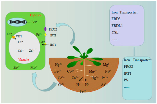 Plants | An Open Access Journal from MDPI