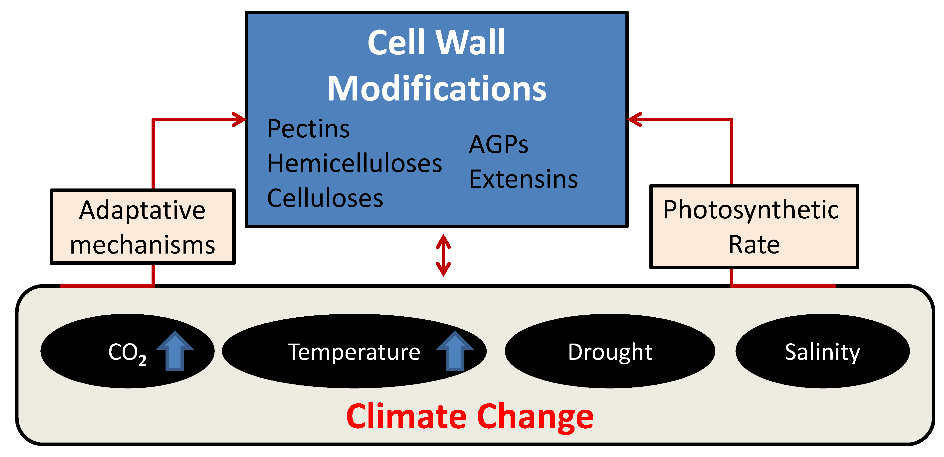 Plants Free Full Text Plant Cell Walls Tackling Climate Change