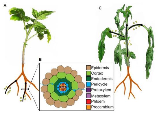 Plants 09 00516 g001 550