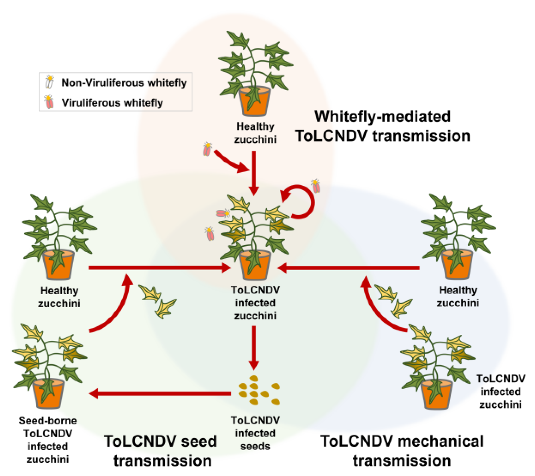 Plants | Free Full-Text | Seed Transmission of Tomato Leaf ...