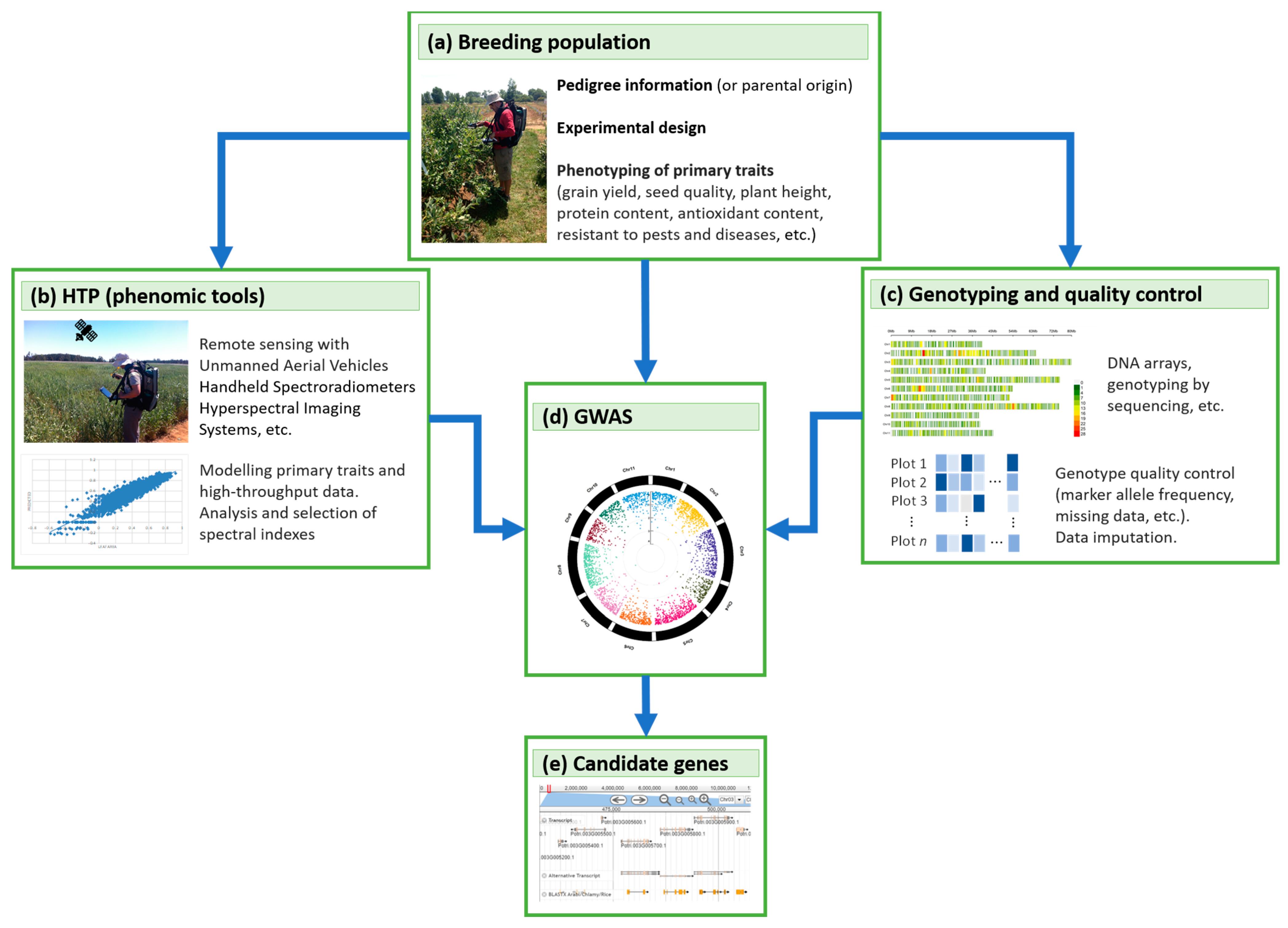Plants   Free Full Text   OMICs, Epigenetics, and Genome Editing ...
