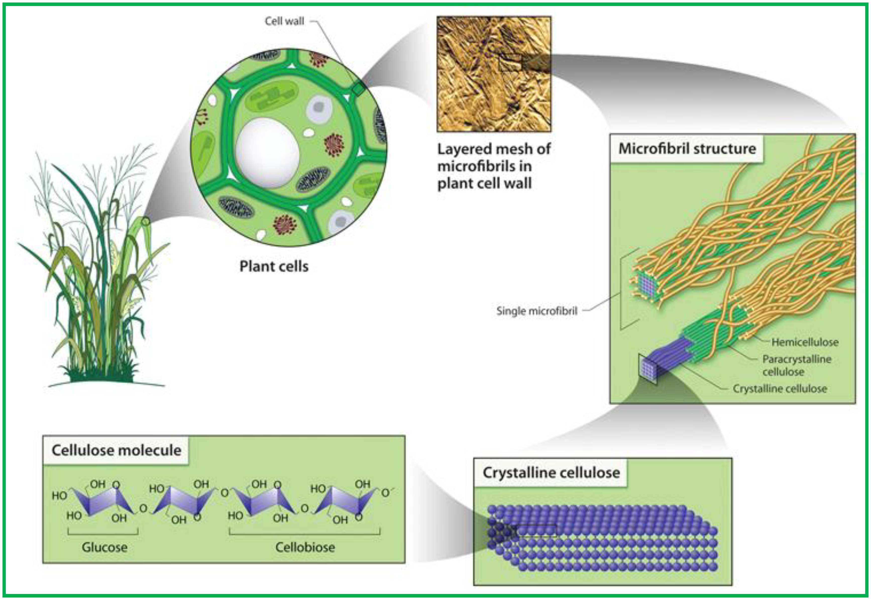 Polymer Composite Cellolose : Polymers free full text cellulosic bionanocomposites