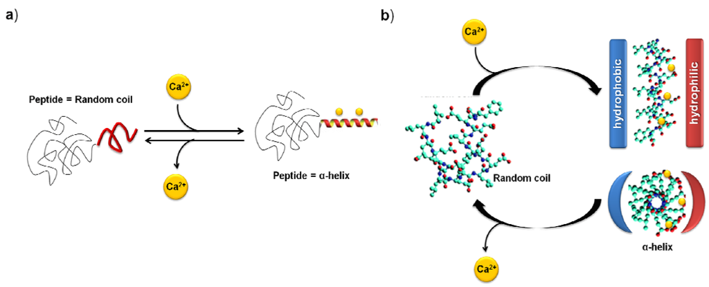 Scheme XIII    a   Schematic representation of the calcium ion induced    Synthetic Polymers Structure