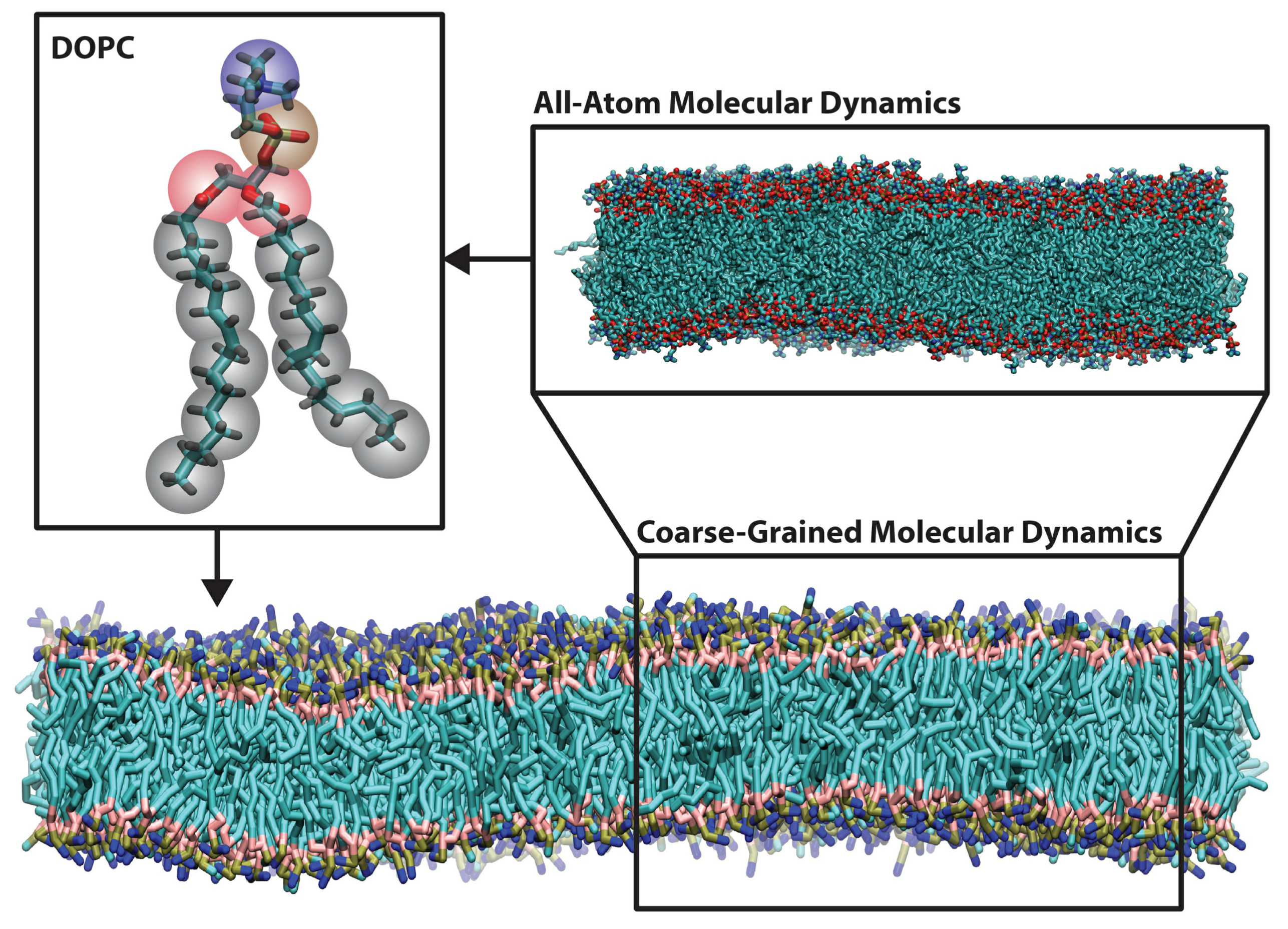 Polymers Free Full Text Coarse Grained Models For Protein Cell Dixon 4423 Wiring Diagram 05 00890 G002