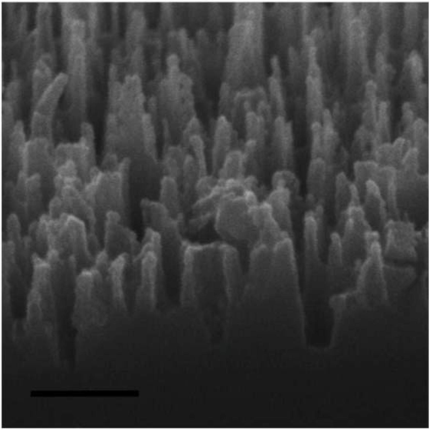 bioabbaubare polymere stants